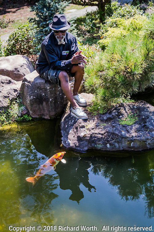 Perched on rocks along the koi pond, a visitor clapped - a steady repetition.  He said he wanted to see if the fish could hear, and when this koi appeared, he felt his test proved they could.