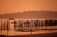 Europe/France/Aquitaine/33/Gironde/Bassin d'Arcachon/Le Cap Ferret: Le bassin d'Arcachon à l'aube