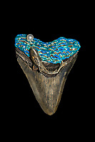 megalodon art - ornamented megalodon fossil tooth, with silver, cultured pearl, cubic zirconia, enamel, and megalodon fossil tooth, Carcharocles megalodon, 15.9 - 2.6 million years old, Neogene period