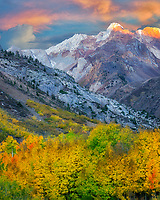 Mcgee Creek drainage with fall colored cottonwood and aspen trees. Eastern Sierra Nevada Mountains, California