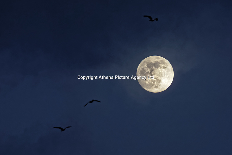 Pictured: The moon rises over the horizon, as seen from Swansea, Wales, UK. Monday 18 February 2019<br /> Re: February's full moon will be the biggest supermoon of 2019.<br /> The supermoon occurs during this full moon because it will be closest to Earth. The supermoon will reach its peak on Tuesday morning but won't be visible.