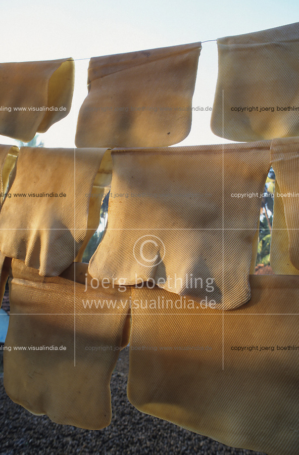 INDIA Karnataka, rubber tree plantation, natural rubber is processed from the milky Latex juice, the rubber is used for products like tyres, condoms and other rubber parts  / INDIEN Karnataka, Kautschuk Baeume auf einer Plantage, aus dem Latex Saft der Kautschukbaeume wird Naturgummi fuer Produkte wie Kondome Einweghandschuhe Gummiteile Latex Matratzen Reifen gewonnen