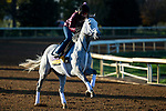 November 3, 2020: Valiance, trained by trainer Todd A. Pletcher, exercises in preparation for the Breeders' Cup Distaff at Keeneland Racetrack in Lexington, Kentucky on November 3, 2020. Jon Durr/Eclipse Sportswire/Breeders Cup
