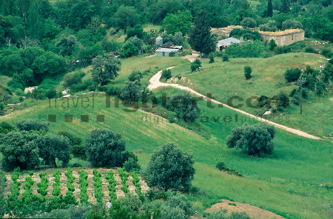 Paphos, Pafos, near Panagia, Vine-Yard, scenic,  Cyprus, Zypern