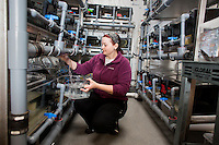 Senior Research Technician Erin Switzer tends to frogs in tanks in Dr. Michael Levin's lab at the Tufts Center for Regenerative and Developmental Biology in the Department of Biology at Tufts University in Medford, Massachusetts, USA. Levin's research focuses on the way that animal cells communicate with one another during embryonic development and cell and tissue regeneration. Levin's lab currently uses frogs and freshwater planaria worms for research. Switzer collects eggs from adult frogs to be used in research.