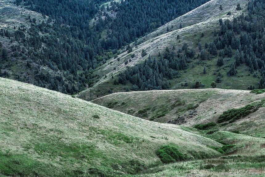 Foothill landscape, Golden, Colorado, USA