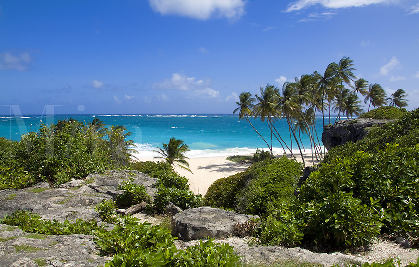 Secluded beach with palm trees on East Coast of Barbados, Bottom Bay, Caribbean