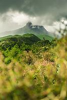 Views surrounding the Hikurangi Hut, Gisbourne District, North Island, New Zealand
