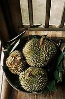 Thaïlande/Ile de Ko Samui/Lipanoi: Durians dans la maison de Mme Hope Cherry