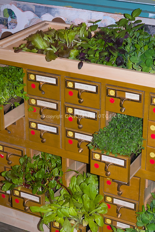 Repurposed old library filing cabinets card catalog drawers being used as unusual plant container pots garden herbs and salad lettuces leaf vegetables, recycling, recycled garden, flea market finds