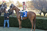 21 February 2009: Palanka City with jockey Chris Emigh after winning the Spring Fever stakes race at Oaklawn in Hot Springs, Arkansas