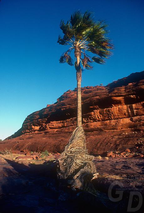 Palm Valley Central Australia
