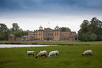 The pastoral landscape of Badminton House park with sheep grazing by a lake