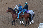 November 3, 2020: Harvey'S Lil Goil, trained by trainer William I. Mott, exercises in preparation for the Breeders' Cup Filly & Mare Turf at Keeneland Racetrack in Lexington, Kentucky on November 3, 2020. John Voorhees/Eclipse Sportswire/Breeders Cup/CSM