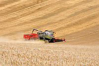 Photo: Richard Lane/Richard Lane Photography..A Claas Lexoin 570 Montana combine harvester unloading into a trailer while cutting spring barley in the Chiltern Hills near Amersham, South Buckinghamshire. 13/08/2007.