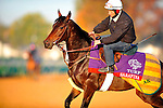 November 2, 2011: Sarafina , trained by Alain De Royer-Dupre and to be ridden by Christophe Lemaire exercises in preparation for the 2011 Breeders' Cup at Churchill Downs on November 2, 2011.