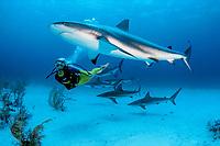 scuba diver and Caribbean reef sharks, Carcharhinus perezii, Bahamas, Caribbean Sea, Atlantic Ocean