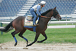Preakness contender Midnight Interlude gallops on Thursday morning, May 19, 2011, at Pimlico Race Course in Baltimore, MD. (Joan Fairman Kanes/EclipseSportswire)