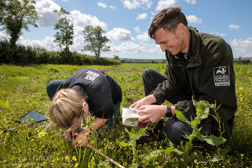 Surveying plant diversity at Fivehead Arable Fields nature reserve, managed by the Somerset Widlife Trust. This site has one of the most important assemblages of rare arable weeds in Britain. Back from the Brink 'Colour in the Margins' project. Somerset, UK. June.