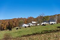 Sugarbush Farm, Woodstock, Vermont, USA