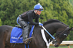 HOT SPRINGS, AR - APRIL 14:  Graded stakes winner Carve, with Abel Flores aboard, gallops at Oaklawn Park on April 14, 2016 in Hot Springs, AR. (Photo by Ciara Bowen/Eclipse Sportswire/Getty Images)