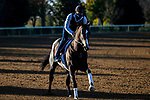 November 3, 2020: Bombard, trained by trainer Richard E. Mandella, exercises in preparation for the Breeders' Cup Turf Sprint at Keeneland Racetrack in Lexington, Kentucky on November 3, 2020. Jon Durr/Eclipse Sportswire/Breeders Cup