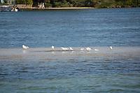 water birds on sand island near St. Petersburg Florida on the intercoastal waterway. Spring 2007