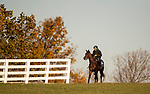 November 3, 2020: Golden Pal, trained by trainer Wesley A. Ward, exercises in preparation for the Breeders' Cup Juvenile Turf Sprint at Keeneland Racetrack in Lexington, Kentucky on November 3, 2020. Carolyn Simancik/Eclipse Sportswire/Breeders Cup