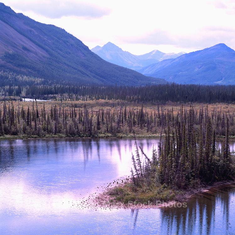 Boreal Black Spruce Forest along Alaska Highway, Northern BC, British Columbia, Canada