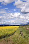 Pancake flat farmland in the Flathead River delta south of Kalispell and north of Big Fork, Montana marks the change in climates from the Mountains of Glacier National Park to the Flathead Lake basin.