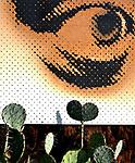 Cactus Life