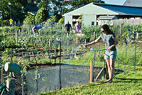 Woman watering her plot in a community garden.
