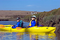 Eco-Tourists KAYAKING along the banks of ELKHORN SLOUGH - MOSS LANDING, CA (MR)