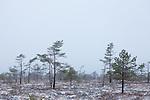 Europa, DEU, Deutschland, Bayern, Rhoen, Fladungen, Hochrhoen, Schwarzes Moor, Winter, Schnee, Typische Landschaft, Kategorien und Themen, Natur, Umwelt, Landschaft, Jahreszeiten, Stimmungen, Landschaftsfotografie, Landschaften, Landschaftsphoto, Landschaftsphotographie, Wetter, Wetterelemente, Wetterlage, Wetterkunde, Witterung, Witterungsbedingungen, Wettererscheinungen, Meteorologie, Wettervorhersage<br /> <br /> [Fuer die Nutzung gelten die jeweils gueltigen Allgemeinen Liefer-und Geschaeftsbedingungen. Nutzung nur gegen Verwendungsmeldung und Nachweis. Download der AGB unter http://www.image-box.com oder werden auf Anfrage zugesendet. Freigabe ist vorher erforderlich. Jede Nutzung des Fotos ist honorarpflichtig gemaess derzeit gueltiger MFM Liste - Kontakt, Uwe Schmid-Fotografie, Duisburg, Tel. (+49).2065.677997, ..archiv@image-box.com, www.image-box.com]