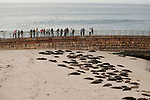 People stand on the jetty watching harbor seals on the beach in La Jolla, California.