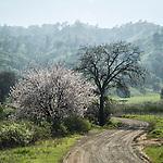 Sacramento Valley Spring