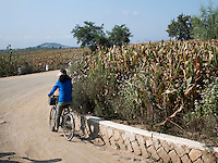 Felder zwischen Nampo und Kangso, Nordkorea, Asien<br /> Fields between Nampo and Kangso, North Korea, Asia