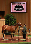 12 September 2011.Hip #127 Curlin - Tears I Cry filly sold for $700,000.