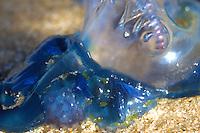 Blue Bottle Study