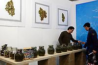 Dried Marijuana<br /> Rome February 21st 2020. Hemp Fair Canapa Mundi Rome 2020.<br /> Photo Samantha Zucchi Insidefoto