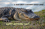 Wild Animal Holiday Photographs Mothers Day