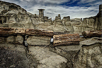 A petrified log dissected by time in the far reaches of the Bisti Wilderness in northwest New Mexico's San Juan Basin.