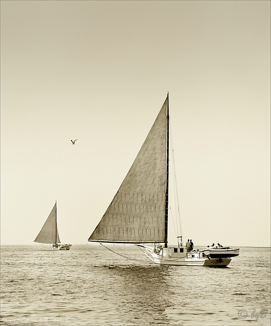 """From the Limited Edition Skipjack Photograph collection of fine art prints """"Heading Out"""" is another favorite from Bill Peterson's """"Skipjack Sunday"""" collection.  The sepia sea beckons to its watermen."""