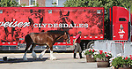 May 16, 2015: Budweiser Clydesdales from Merrimack, New Hampshire, are at Pimlico for Preakness weekend. They were paraded on the track on BlackEyed Susan day and will be again on Preakness day if weather permits. Preakness Day scene at Pimlico Race Course in Baltimore, PA. Joan Fairman Kanes/ESW/CSM