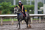 SHA TIN,HONG KONG-APRIL 27: Chautauqua ,trained by Michael Hawkes,exercises in preparation for the Chairman's Sprint Prize at Sha Tin Racecourse on April 27,2016 in Sha Tin,New Territories,Hong Kong (Photo by Kaz Ishida/Eclipse Sportswire/Getty Images)