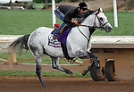 ARCADIA, CA - NOV 01: Holy Lute, owned by Class Racing Stable and trained by James M. Cassidy, exercises in preparation for the Breeders' Cup Turf Sprint at Santa Anita Park on November 1, 2016 in Arcadia, California. (Photo by Scott Serio/Eclipse Sportswire/Breeders Cup)