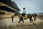 DEL MAR, CA - OCTOBER 27:  Pavel walks off the track after working out for the Breeders' Cup Classic at Del Mar Thoroughbred Club on {mothname} 27, 2017 in Del Mar, California. (Photo by Alex Evers/Eclipse Sportswire/Breeders Cup)