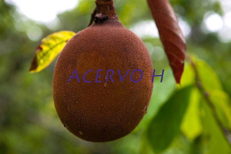 Cupuaçu é o fruto de uma árvore originária da Amazônia (Theobroma grandiflorum; ex - Sterculiaceae), parente próxima do cacaueiro. A árvore é conhecida como cupuaçuzeiro, cupuaçueiro ou cupu, é uma fruta extremamente saborosa típica da região norte brasileira, muito encontrada no estado do Pará e Amazonas. É muito usado na culinária doce, azeda e agridoce pelas populações tradicionais da Amazônia.