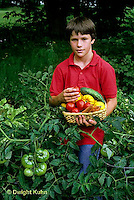 HS09-041z  Tomato - boy picking tomatoes