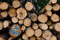 GERMANY, Plau, forest / Wald, Forstwirtschaft, gefällte Laubbäume, Birke mit Markierung
